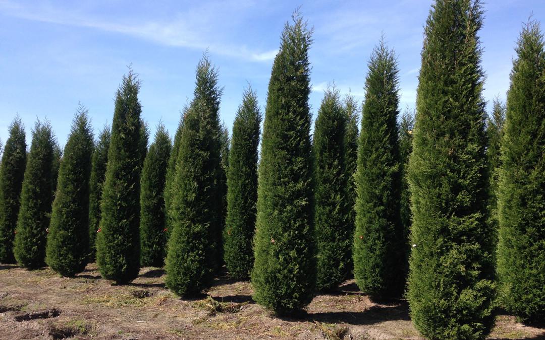Tuinbeplanting top 3